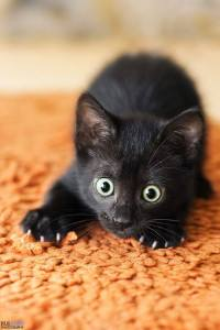 wide eyed black kitty