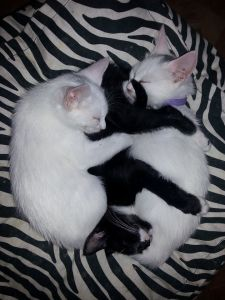 3 sleeping kitties