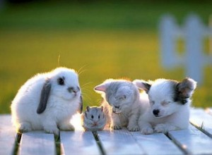ahhh cute