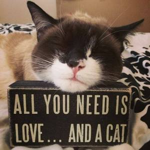 all u need is love kitty