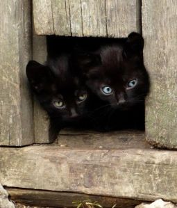 blk kitties