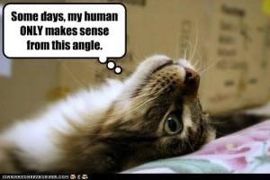kitty angle